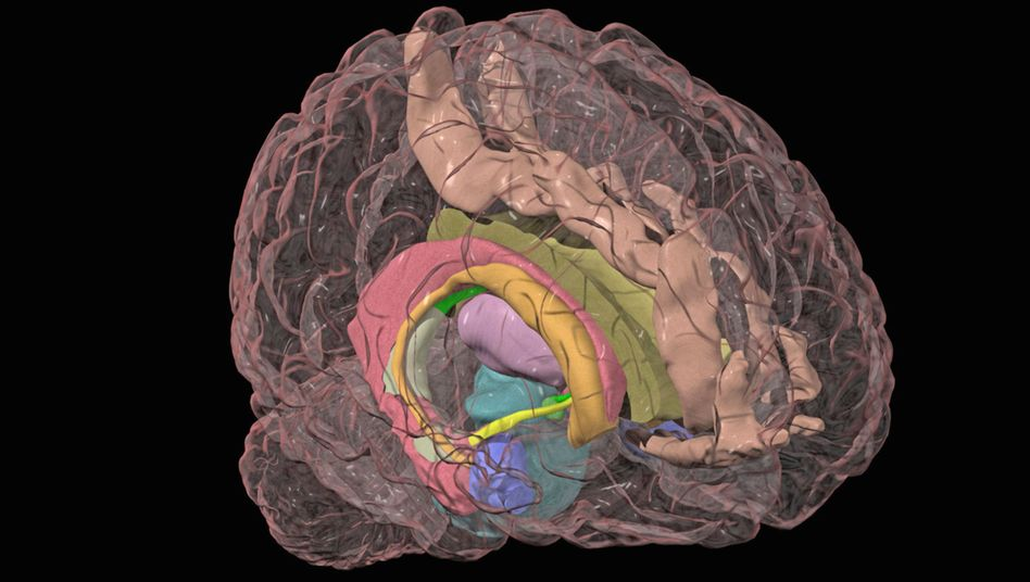Menschliches Gehirn (Illustration): Das Zentrum der Angst ist der Mandelkern