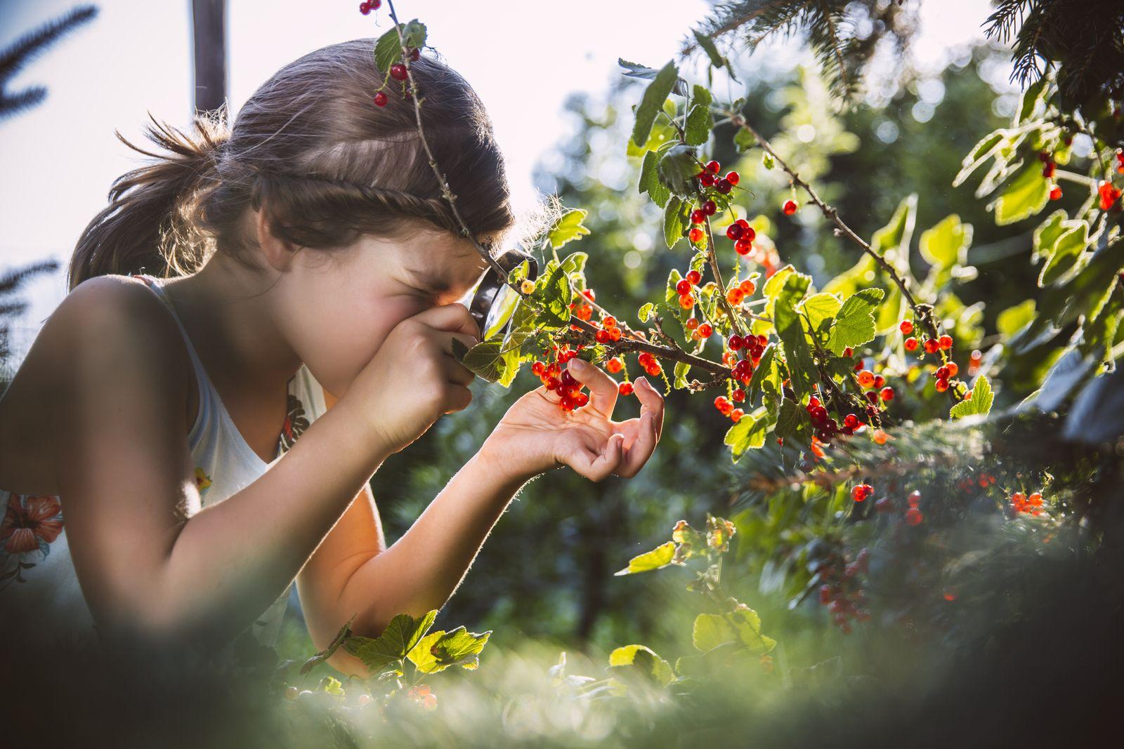 EINMALIGE VERWENDUNG Mädchen/ Beeren/ Natur