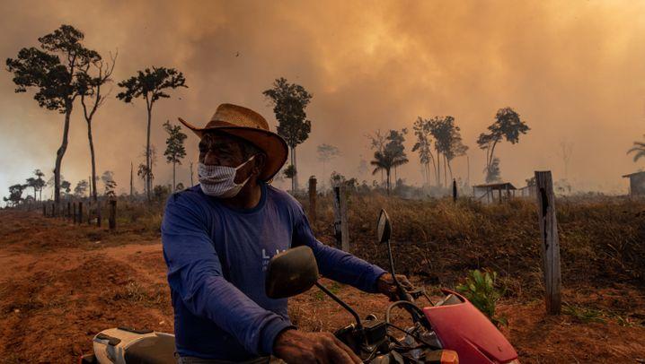 Wo der Regenwald brennt