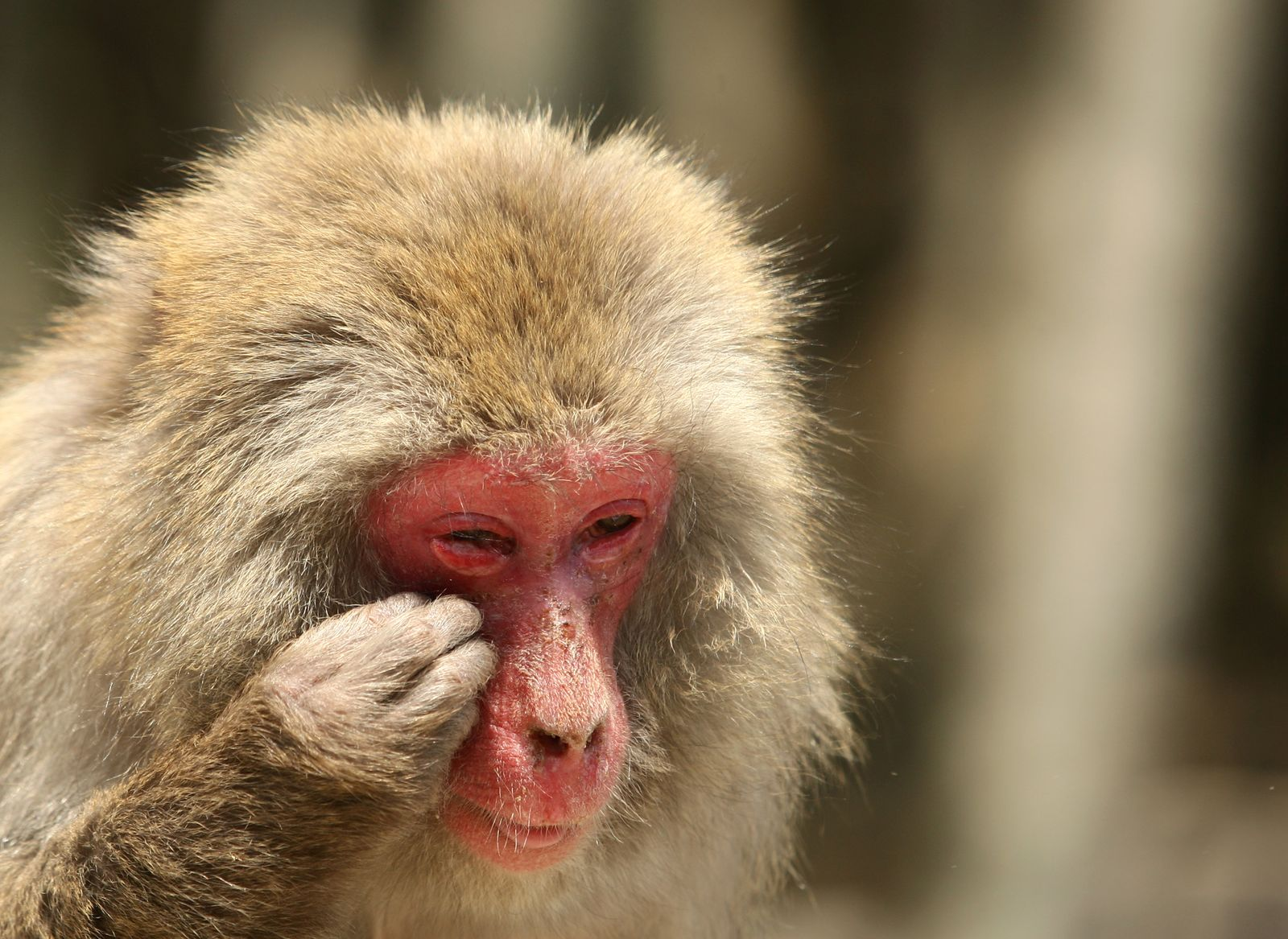 Makake Allergie