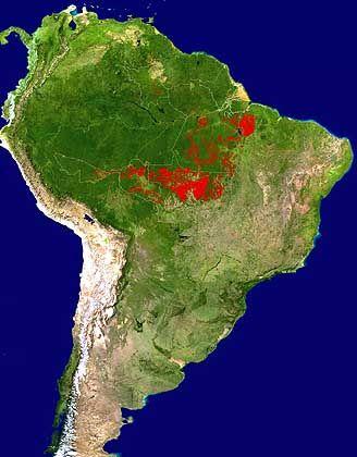 Regenwald in Südamerika: Rote Flecken zeigen selektiven Holzeinschlag