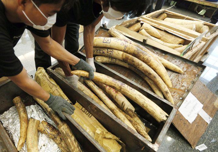In Bangkok (Thailand) beschlagnahmtes Elfenbein