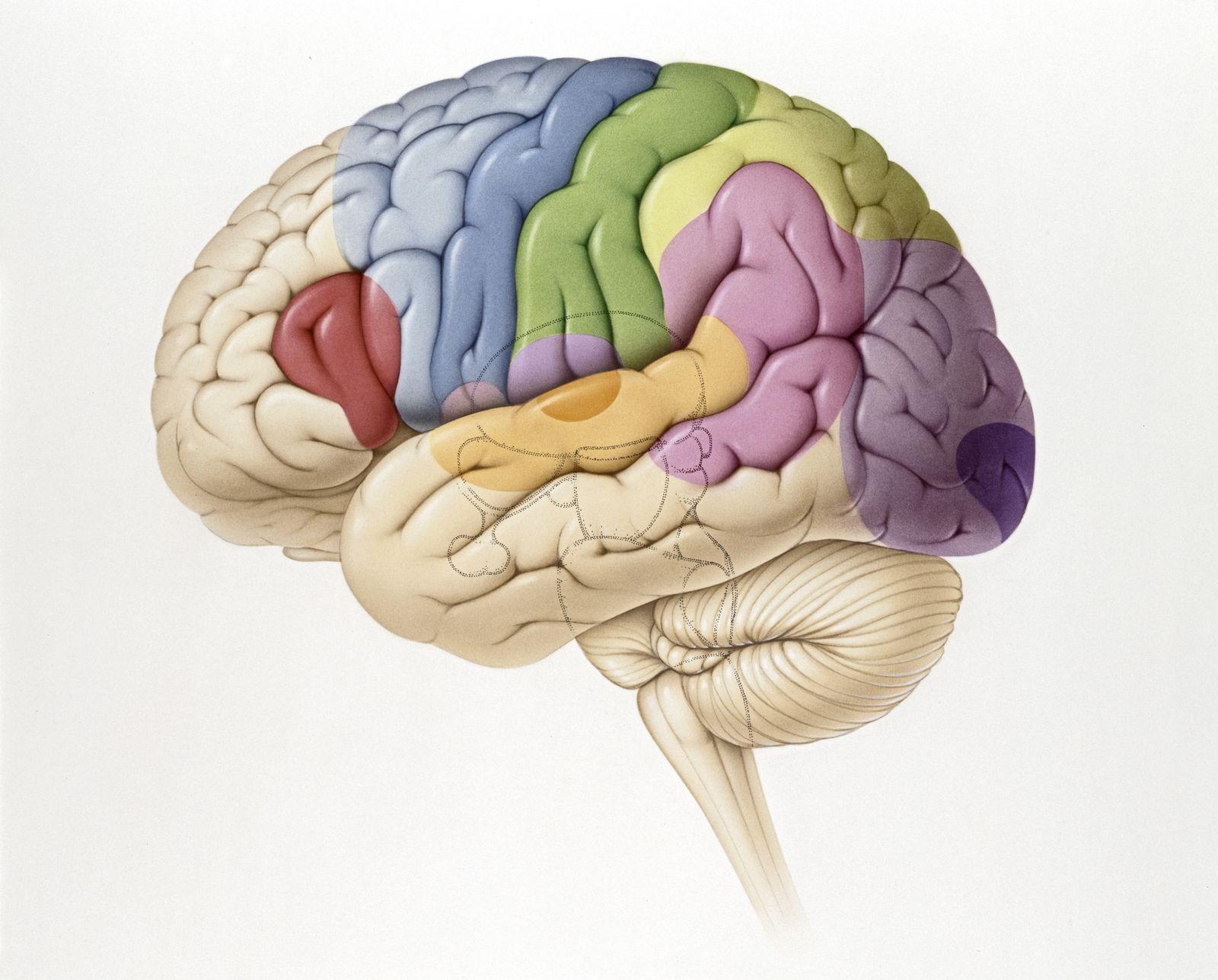 NICHT MEHR VERWENDEN! - SYMBOLBILD Gehirn