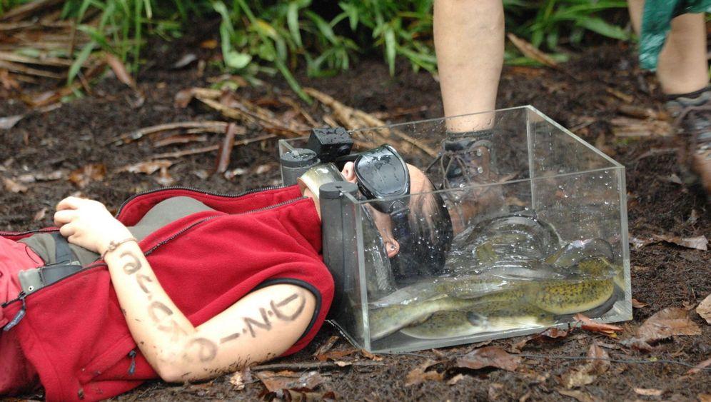 Letzte Folge Dschungelcamp