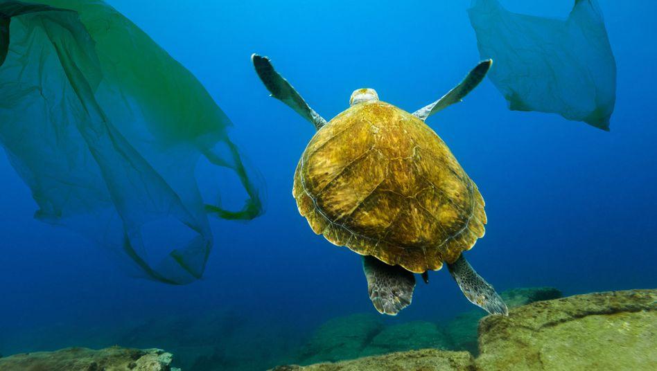 Schildkröte schwimmt zwischen Plastiktüten (Symbolbild)
