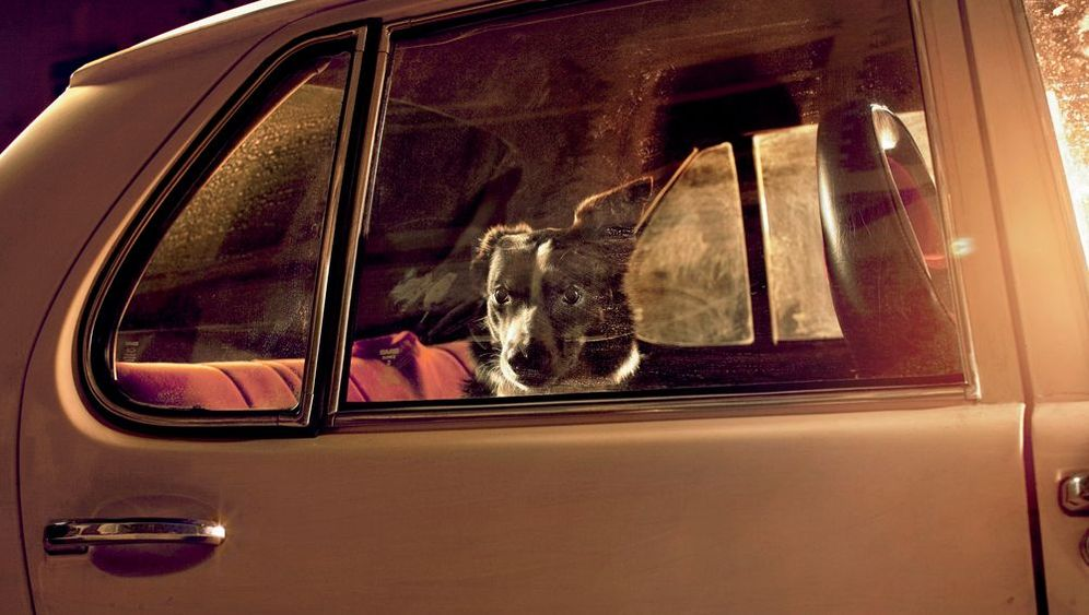 "Bildband ""The Silence of Dogs in Cars"": Edward Hopper der Hundeblicke"
