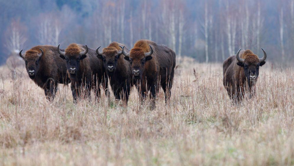Photo Gallery: Rewilding Europe