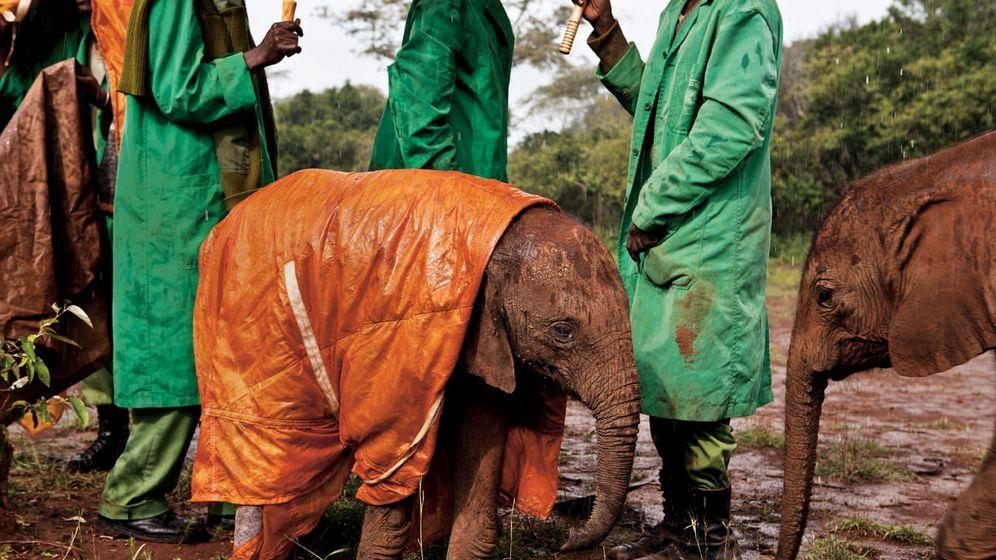 Elefanten-Station in Kenia: Ein Rettungsschirm für kleine Dickhäuter