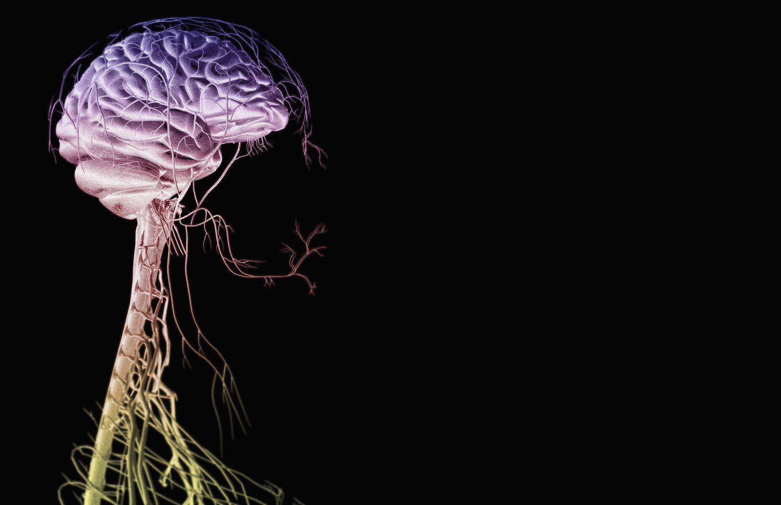 NICHT MEHR VERWENDEN! - Gehirn / Nerven