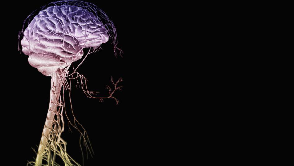 Menschliches Gehirn (Computergrafik); Wie können Maschinen lernen?