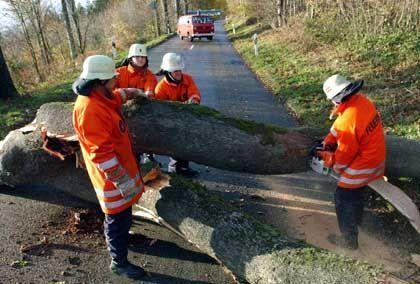Blockierte Fahrbahnen: Feuerwehrleute beseitigen umgestürzte Bäume