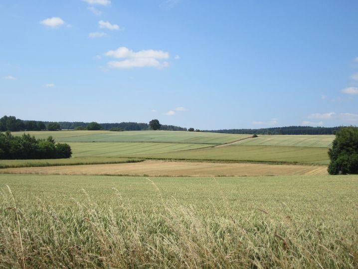 Kleinräumige Landschaften wie diese in der Region Göttingen fördern Bestäuber