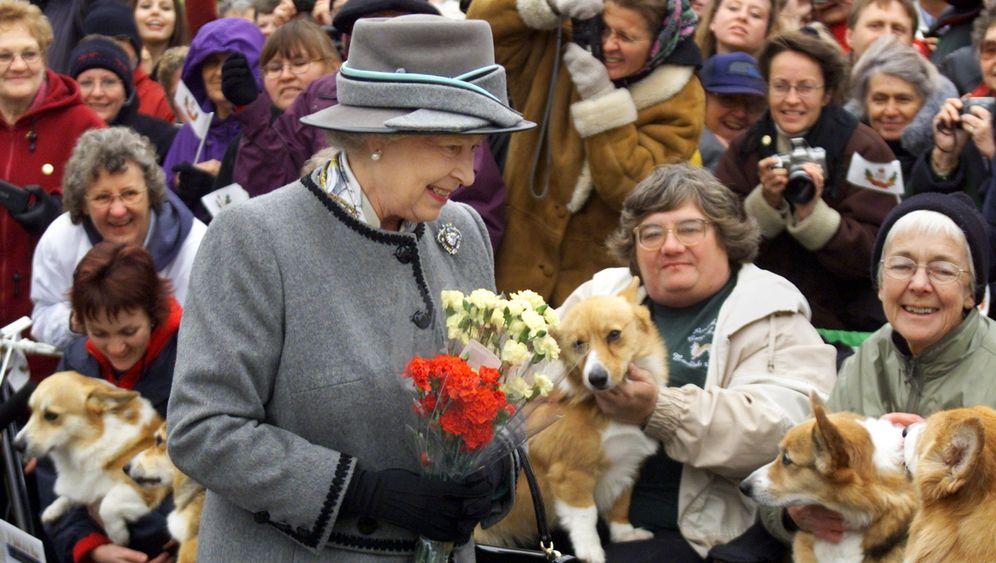Bedrohte Hunderasse: Die Queen und die Corgis