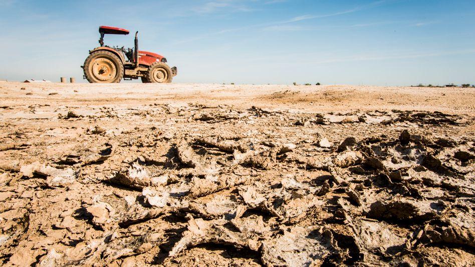 Dürre in Kalifornien: »Wir betreten Neuland«