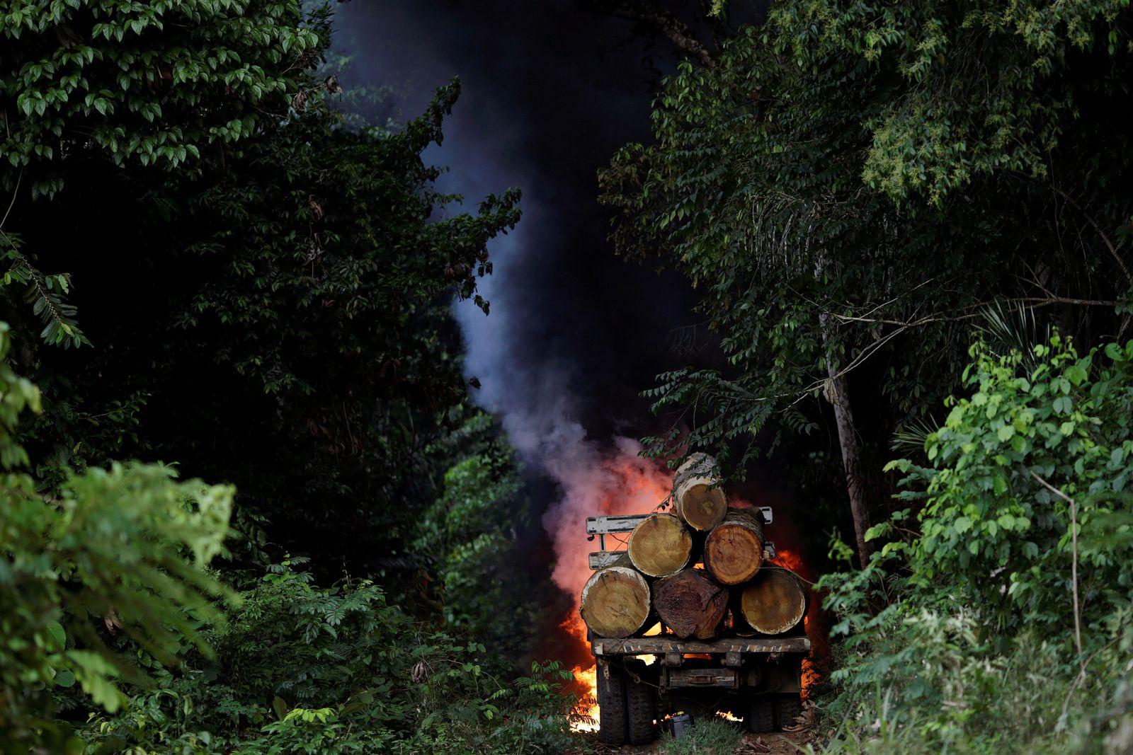 Nationalpark/ Para/ Brasilien/ Abholzung