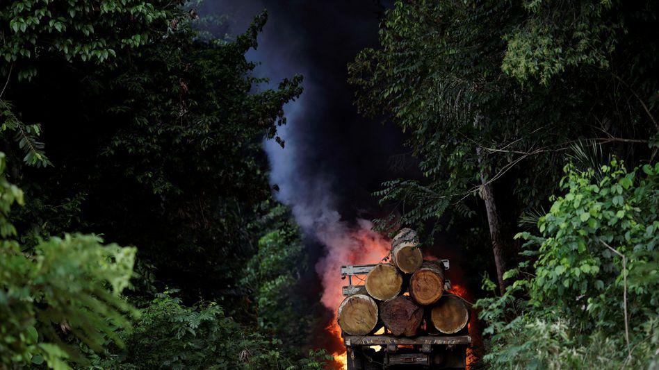 Abholzung von Regenwald im Bundesstaat Para