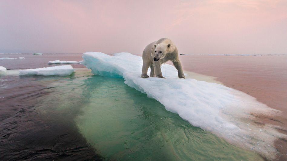 """Eismasseverlust im hohen Norden: """"Es wäre ein großer Fehler, den Eisschwund der Arktis für ein Problem nur der Eisbären zu halten"""""""