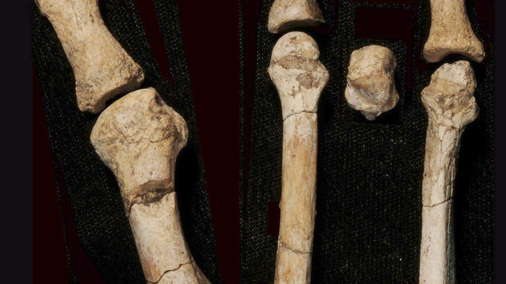 """Knochenfund: """"Lucys"""" Verwandte aus dem Wald"""