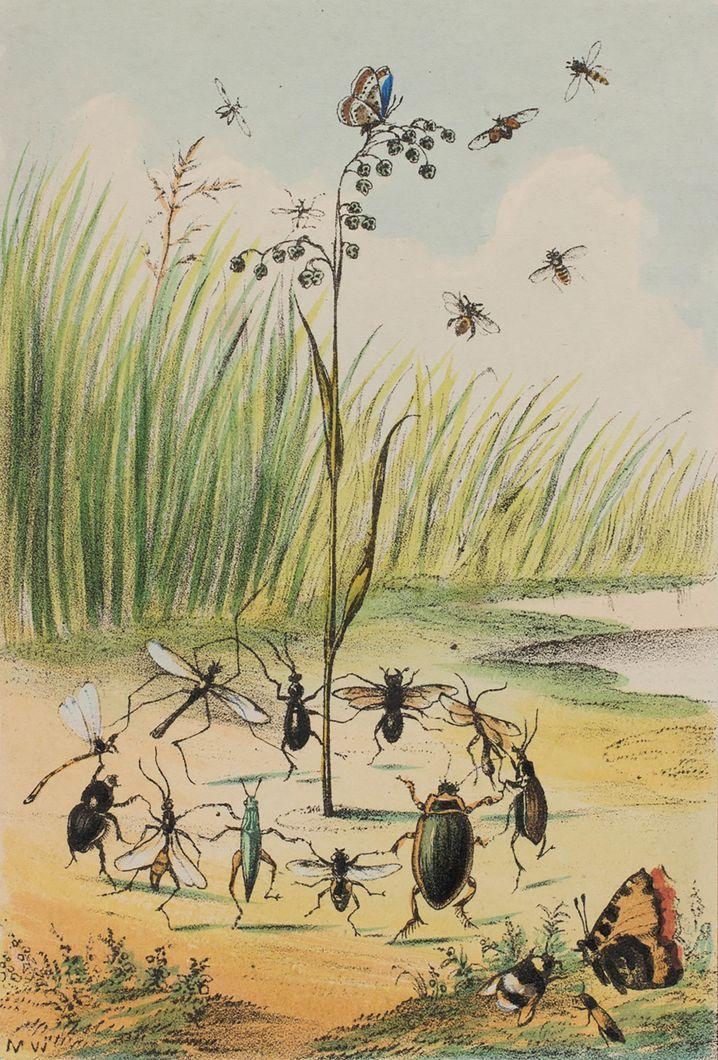 Illustration von Mary Ward: Sie schrieb Teleskopie- und Mikroskopie-Einführungen für Anfänger, eines der Bücher richtete sich an Kinder