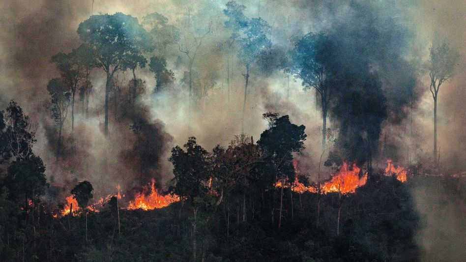 Brennender Amazonasregenwald Erbarmungsloser Kampf gegen die Natur