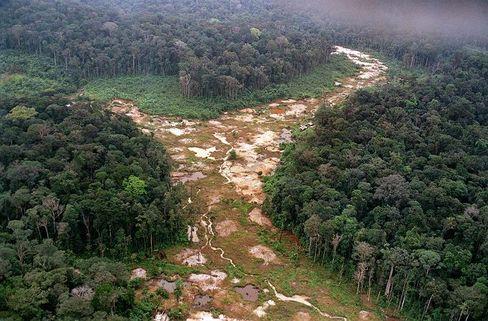 Abgeholzte Flächen im Amazonas-Regenwald: Die grüne Lunge hat 2005 mehr CO2 aus- als eingeatmet