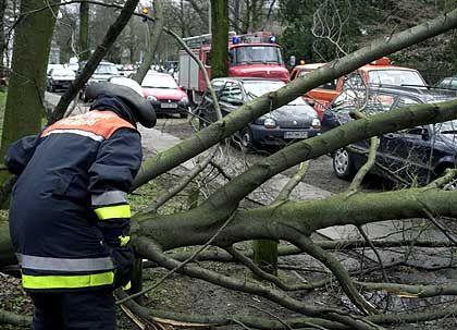 Hamburg: Ein Feuerwehrmann versucht einen umgestürzten Baum vom Bürgersteig zu ziehen