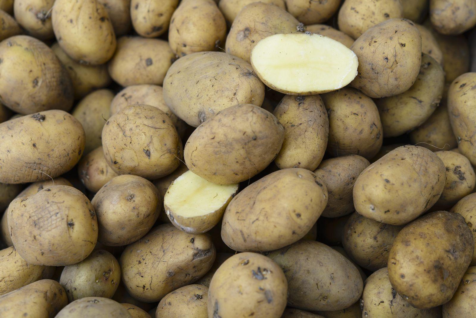 Natur/ Deutschland/ Umfrage/ Kartoffel
