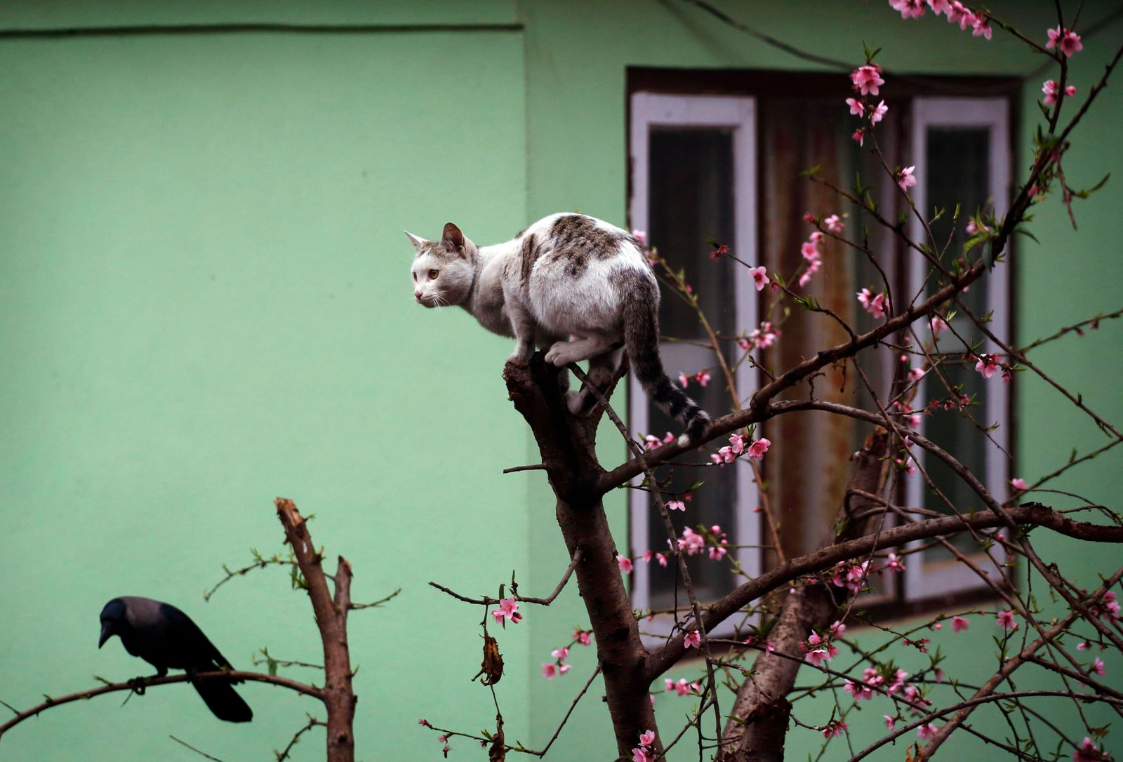 A cat sits on top of a tree in Kathmandu