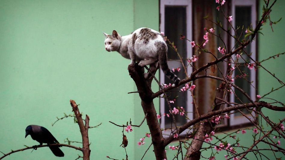 Nicht wahlberechtigt, nirgends: eine Katze