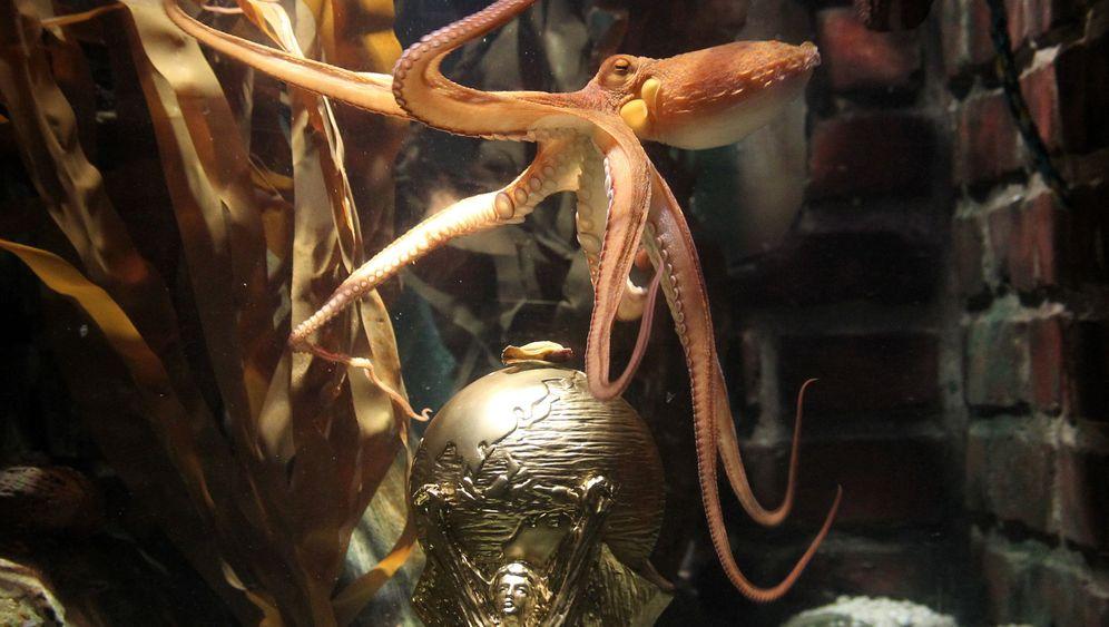 Kraken-Orakel: Pulpo Fiction