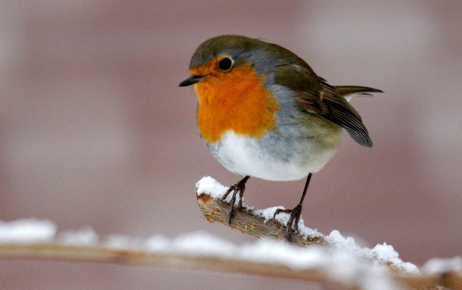 Winter / Natur