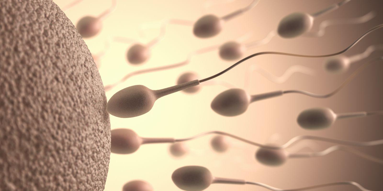 Weiblichen Körper von Spermien auf den Auswirkungen Wie beeinflusst