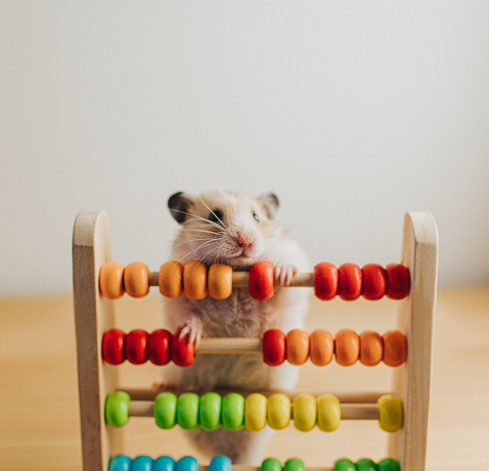 Hamster and an Abacus