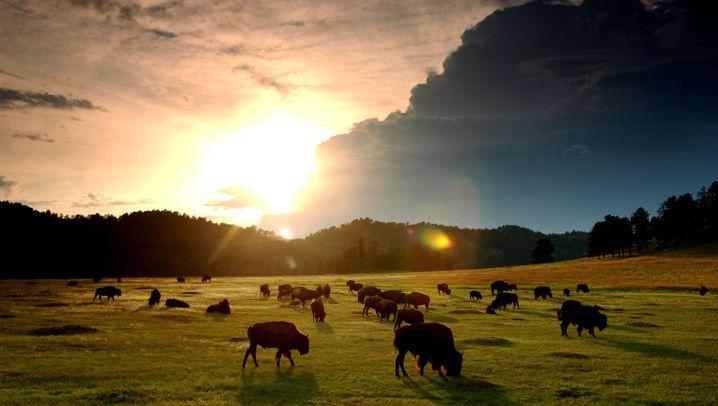 Facettenreiche US-Nationalparks: Von B wie Bison bis Z wie Zwielicht