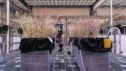 So arbeiten deutsche Forscher an der Landwirtschaft der Zukunft