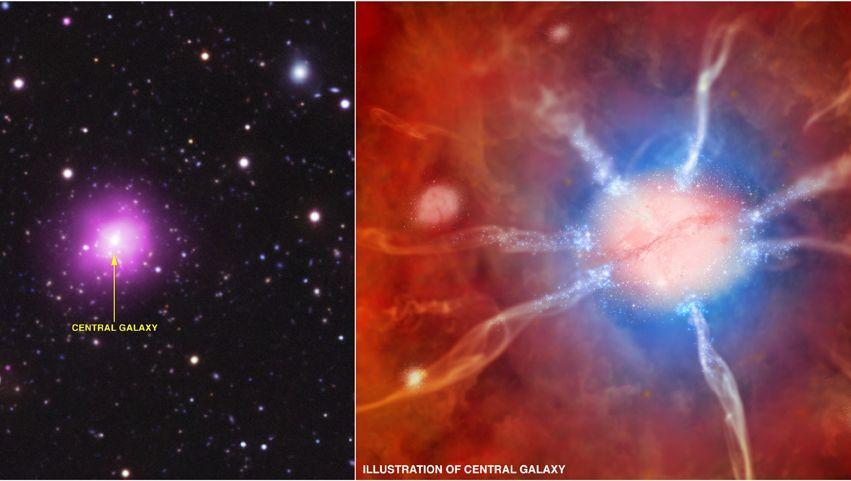 Ungewöhnlicher Galaxienhaufen: Phoenix-Cluster entpuppt sich als Sternenkinderstube