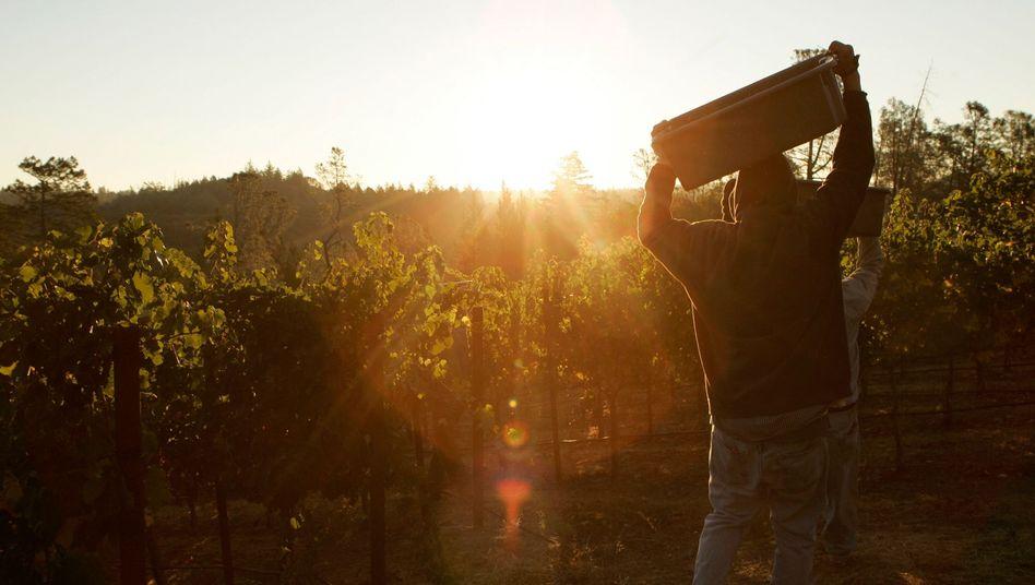 Weinernte im kalifornischen Napa Valley: Deutschland auf Platz vier