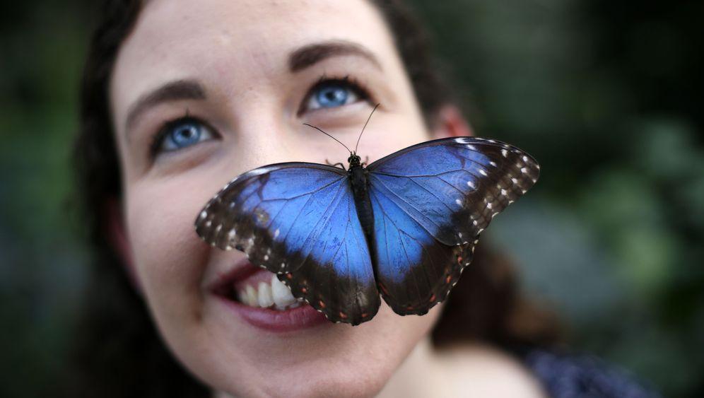 Schmetterlinge: Flatternde Herzwärmer