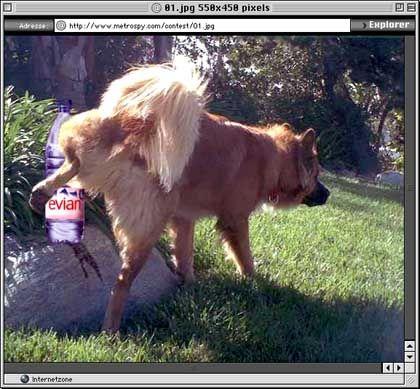 Prämiertes Feind-Bild: Hund pinkelt auf Evian-Flasche