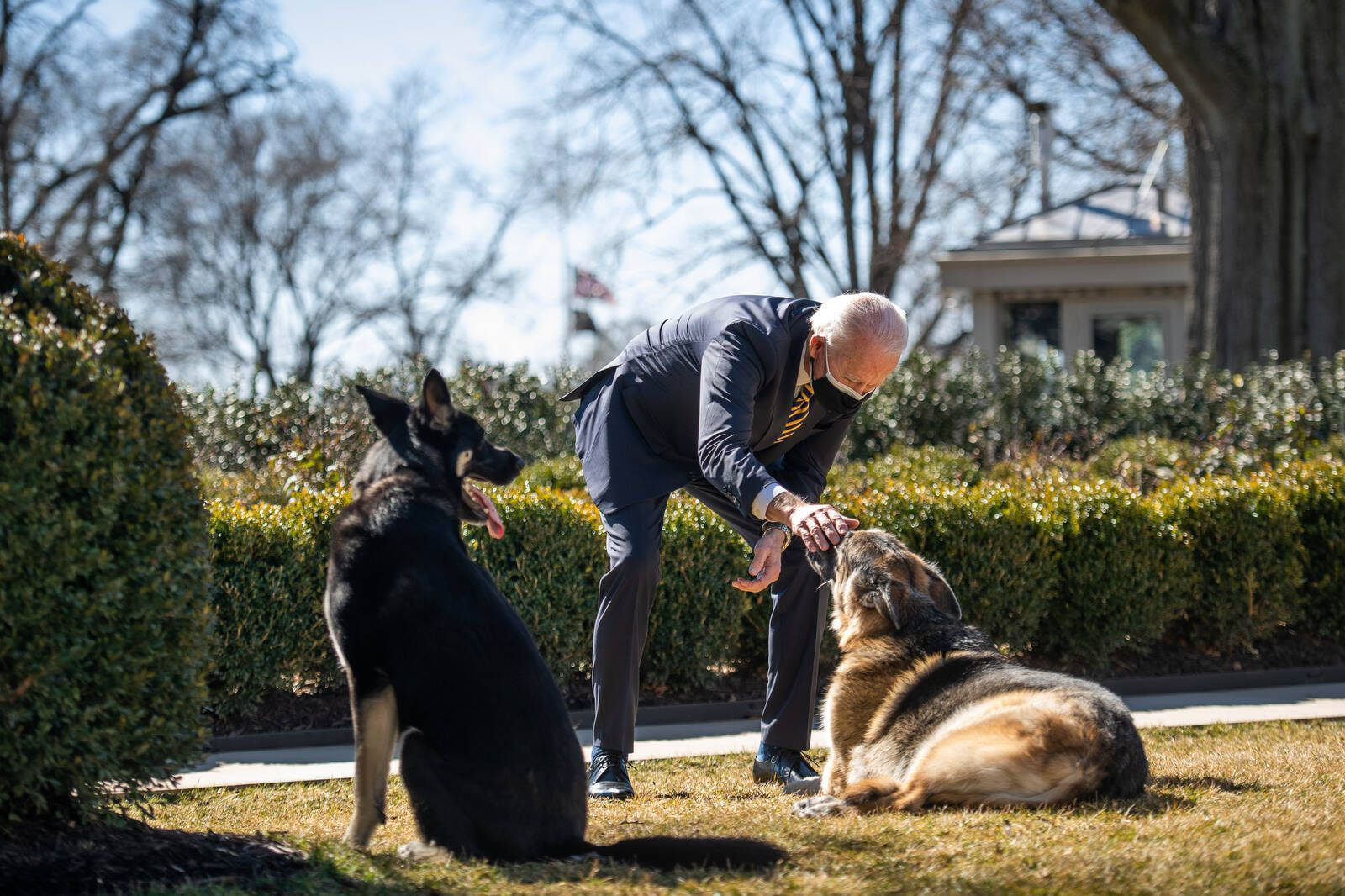 Feb 24, 2021 - Washington, District of Colombia, USA - President Joe Biden plays with the Biden family dogs Champ and Ma