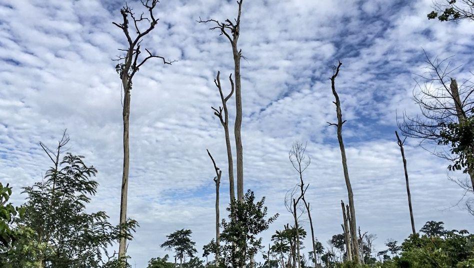 Reste von Regenwald in der Elfenbeinküste