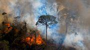 Größter Regenwald der Erde wird zur Kohlendioxid-Quelle