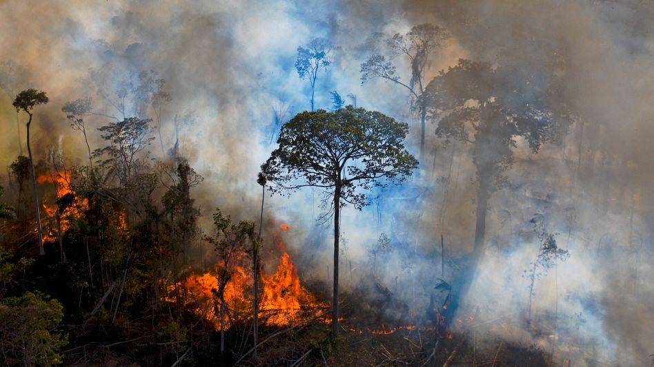 Brand im Amazonas-Regenwald im August 2020: Bei Bränden wird der in den Pflanzen gespeicherte Kohlenstoff als CO₂ frei