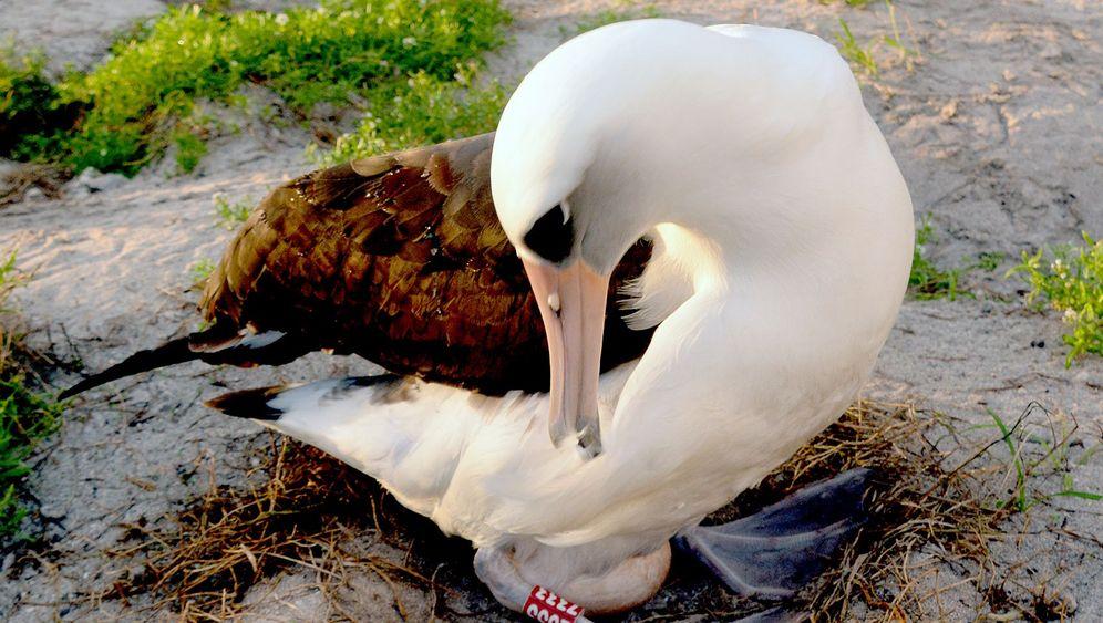 Albatros-Rekord: Mutter mit 63
