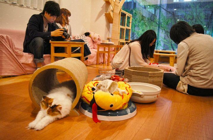 Erst zahlen, dann anfassen: Katzen-Freunde im Streichel-Café