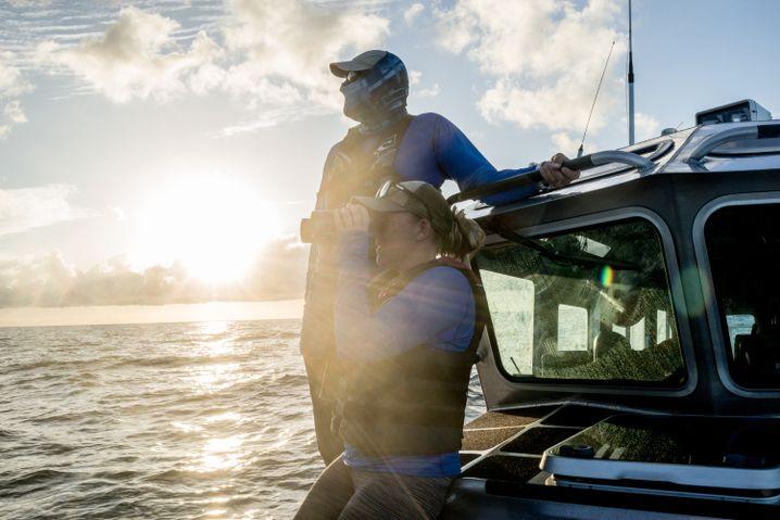 Schweinswal-Suchteam auf der Cortés-See
