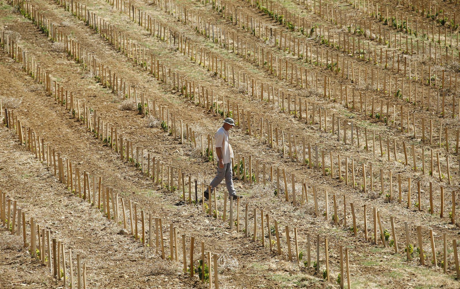 Dürre/ Südfrankreich