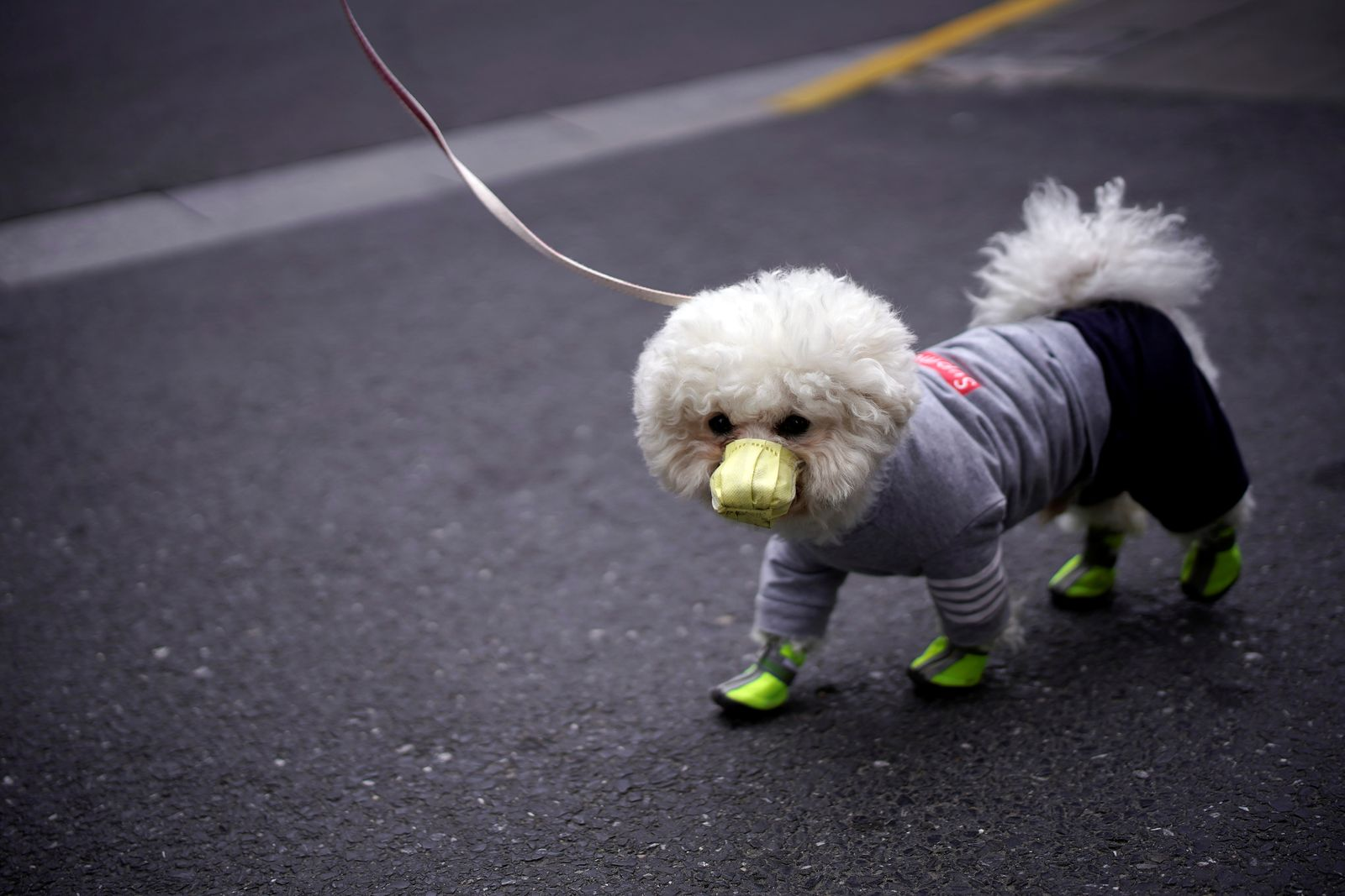 A dog wearing face mask is seen on a street as the country is hit by an outbreak of the novel coronavirus, in Shanghai