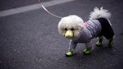 Nein, Hunde erkranken nicht an Covid-19