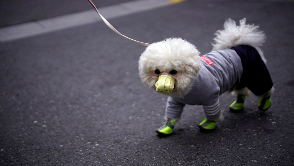 Atemschutz für den Hund - das ist auch in Shanghai nicht nötig, wo dieses Foto aufgenommen wurde